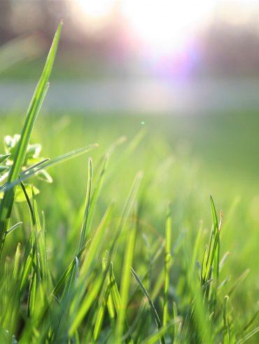 Alles over gras en tuintrends vind je op kunstgrasrevolutie.nl